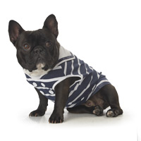 sailor french bulldog