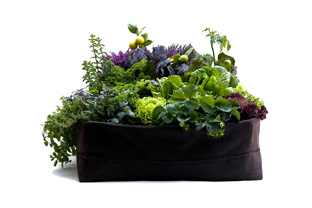 Woolly Pocket Herb garden
