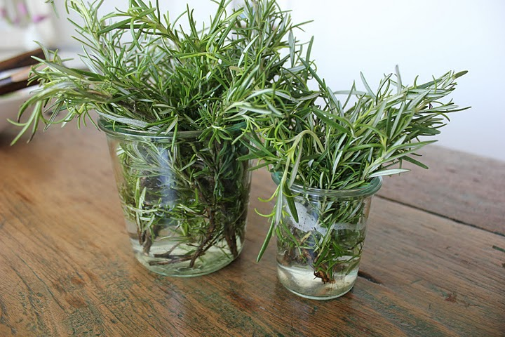 Rosemary in jam jars