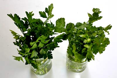 store-parsley-cilantro-1